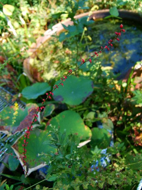 鎌倉公園の野草園(写真12枚)_e0089232_1854947.jpg