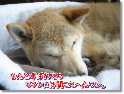 面白サイ子_c0049950_135539.jpg