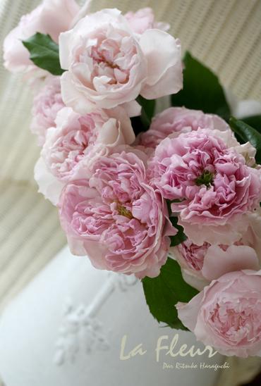 かわいいバラ シェリル_f0127281_22544434.jpg