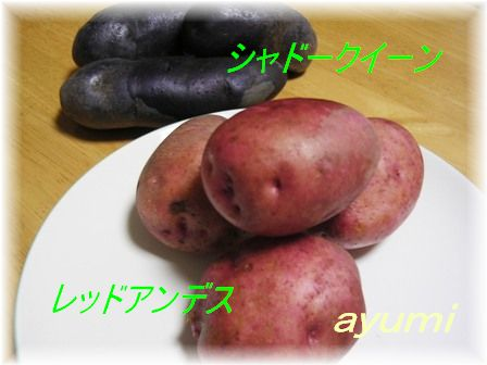a0038892_1112159.jpg