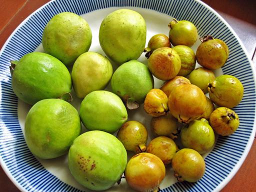グァバとイエローストロベリーグァバの果実