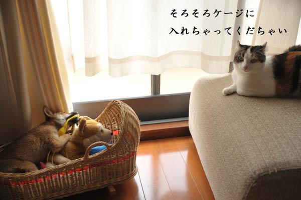 b0141397_13373819.jpg
