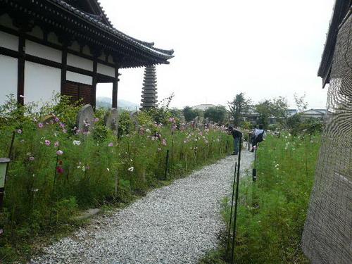 今日のお散歩_b0174217_2139327.jpg