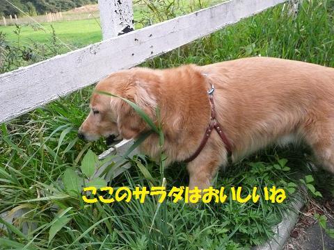 f0114128_2204780.jpg