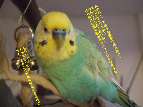 f0149057_013726.jpg