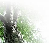 キヌカは無臭で安全な塗料です。_c0209866_19473589.jpg