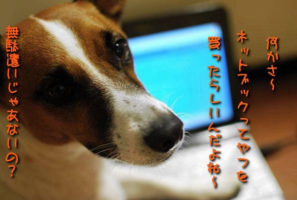 f0203612_220591.jpg