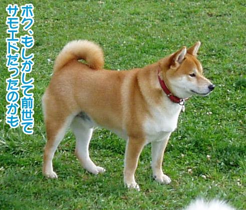 桃姫5歳になりました_a0044521_21405046.jpg