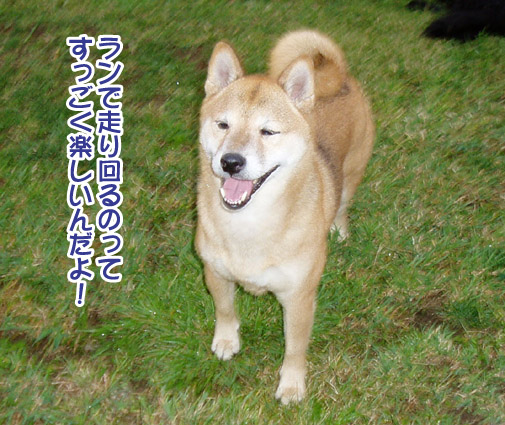 桃姫5歳になりました_a0044521_21414792.jpg