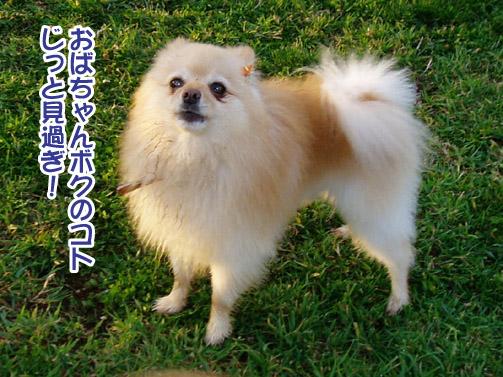 桃姫5歳になりました_a0044521_21433479.jpg