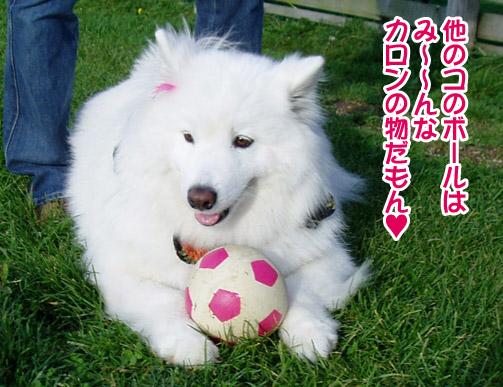桃姫5歳になりました_a0044521_21455117.jpg
