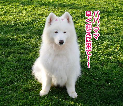 桃姫5歳になりました_a0044521_21471513.jpg