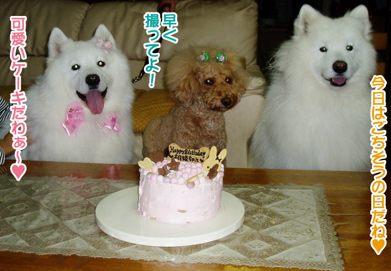 桃姫5歳になりました_a0044521_2275197.jpg