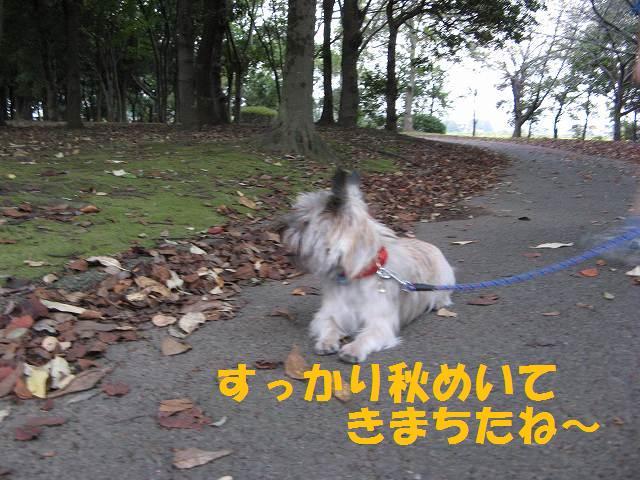 c0202659_2326618.jpg