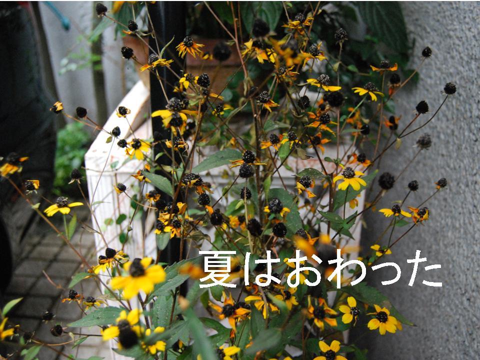 f0043859_19485556.jpg