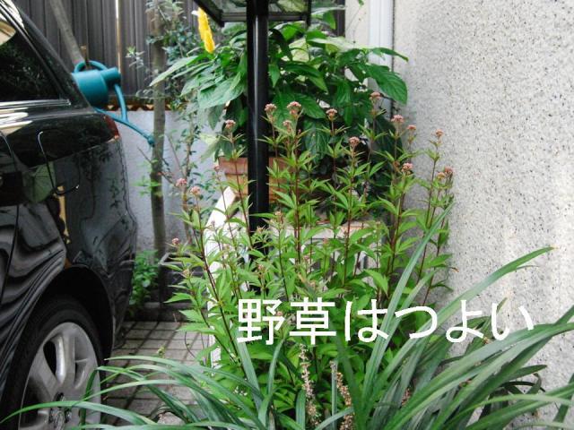f0043859_19502688.jpg