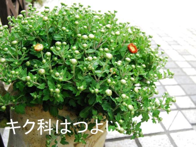 f0043859_19503210.jpg
