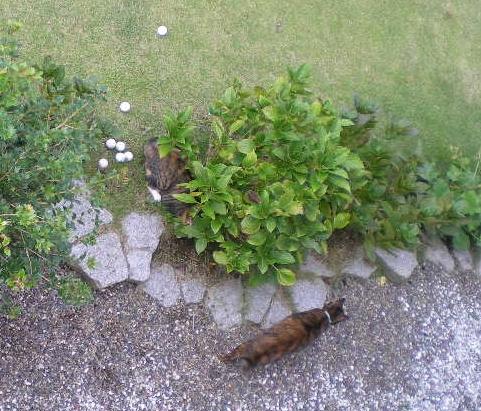 2009年10月4日(日)畑と花木に米ヌカを!_f0060461_20121874.jpg