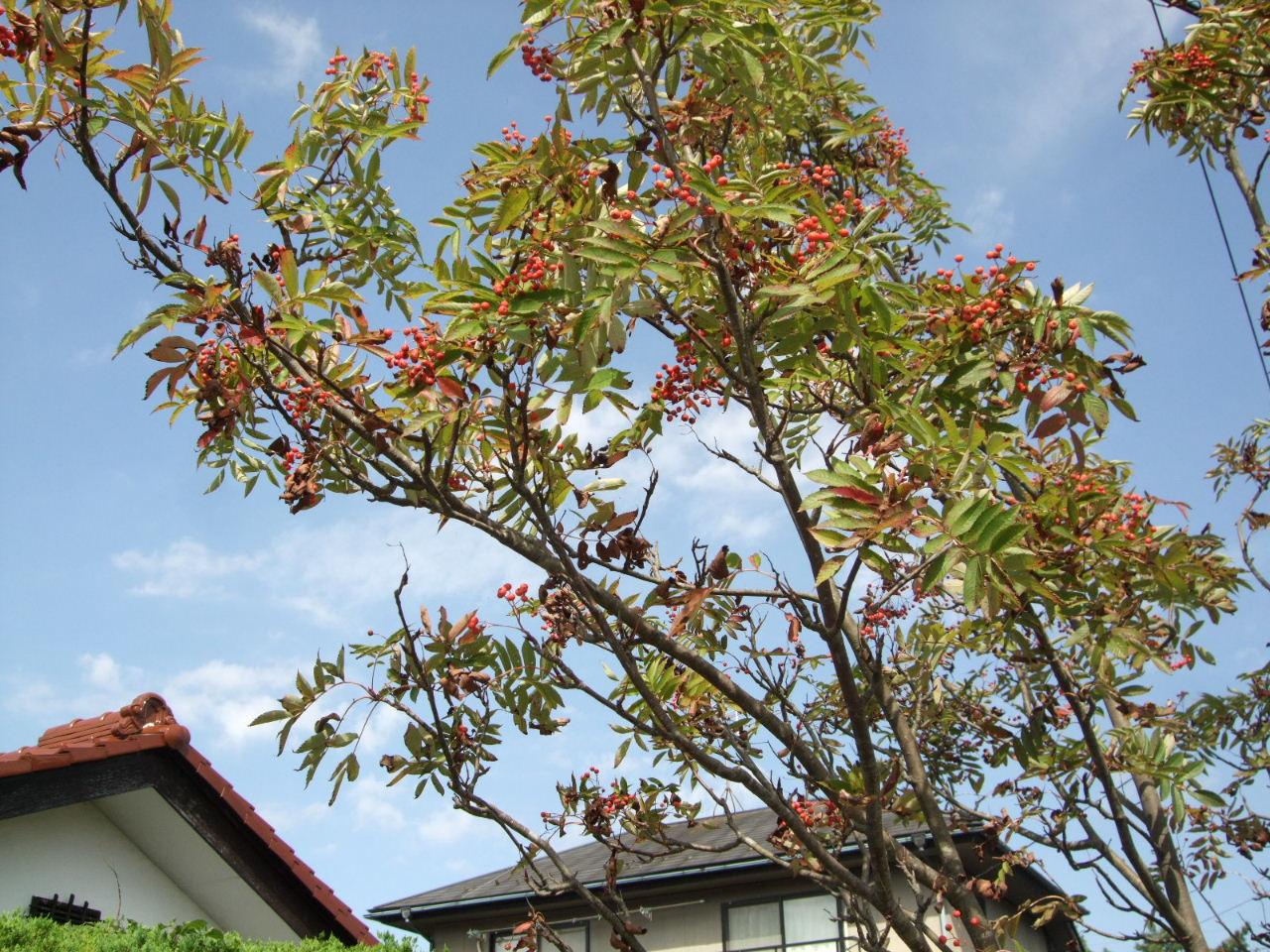 だんだん秋色の台原森林公園_f0100593_18584631.jpg