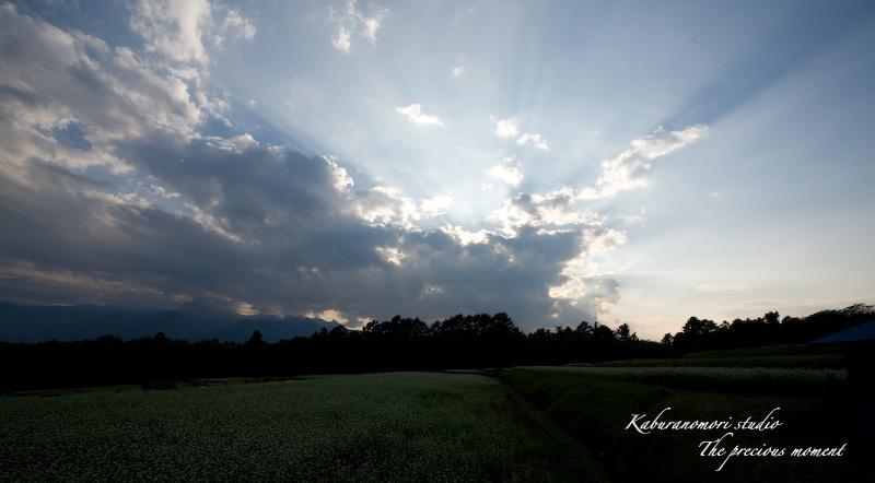 09/9/25      高原に広がる蕎麦畑の昼夕_c0137403_14222875.jpg