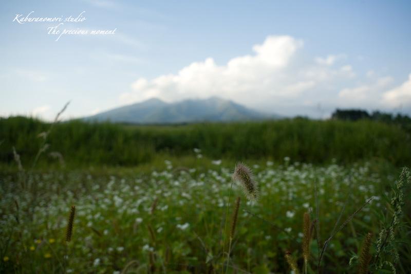 09/9/25      高原に広がる蕎麦畑の昼夕_c0137403_1759108.jpg