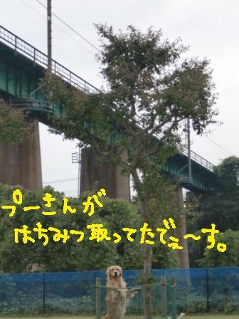 f0176830_2136439.jpg