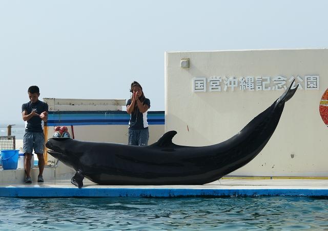 海洋博公園_f0018464_732485.jpg