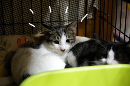 子猫脱走_a0064067_12113643.jpg