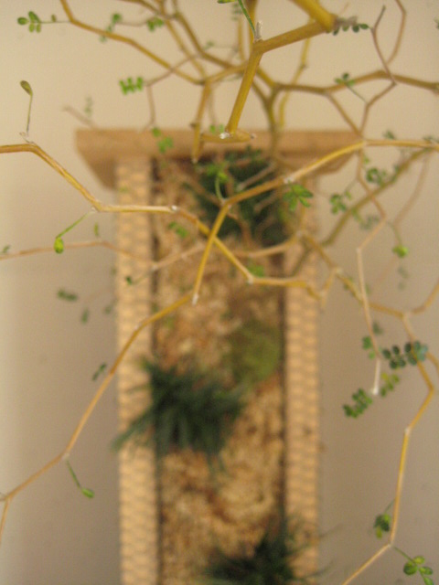 茶の間に添える小さな茶庭_c0192970_191361.jpg