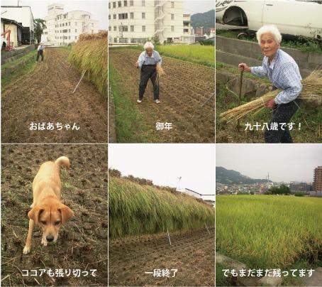 稲刈り_e0158970_17585159.jpg