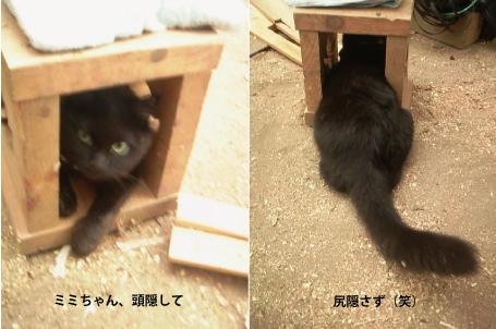 稲刈り_e0158970_1821992.jpg