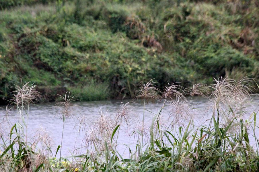 小雨降る川原の土手から。。。_a0107574_7221670.jpg