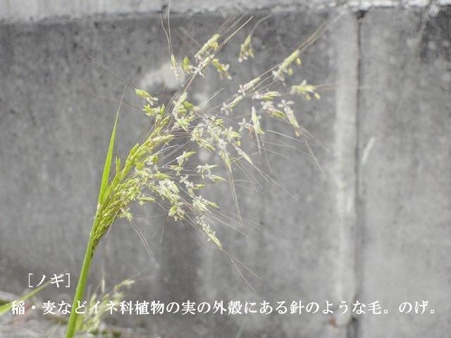 d0116574_16451473.jpg