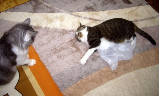 カシャカシャの袋は、みんな大好き♪_a0136293_11322039.jpg