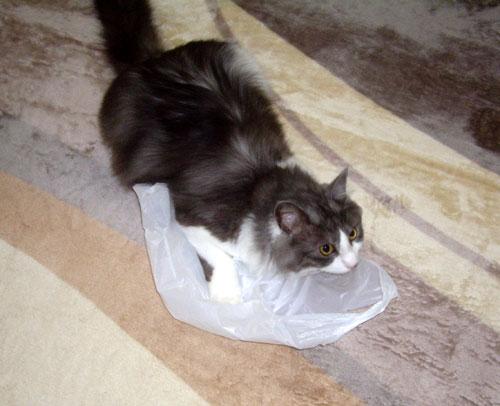 カシャカシャの袋は、みんな大好き♪_a0136293_11323789.jpg