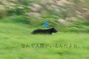 b0119620_1483260.jpg