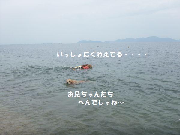 b0127531_184194.jpg