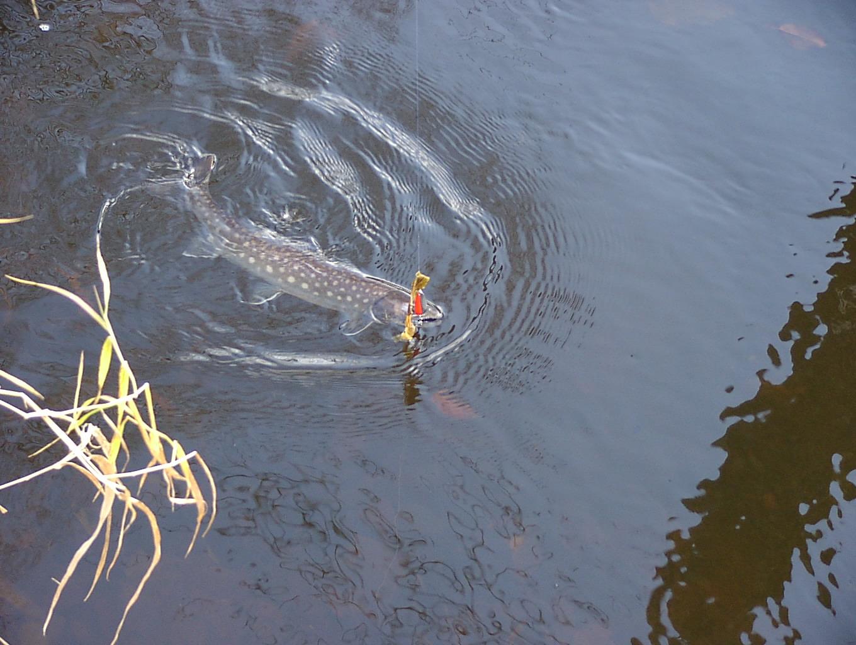 さすらいのアングラー 魚もつらいよ編 10月6日_f0113639_16421643.jpg