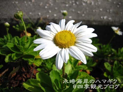 f0105342_152809.jpg