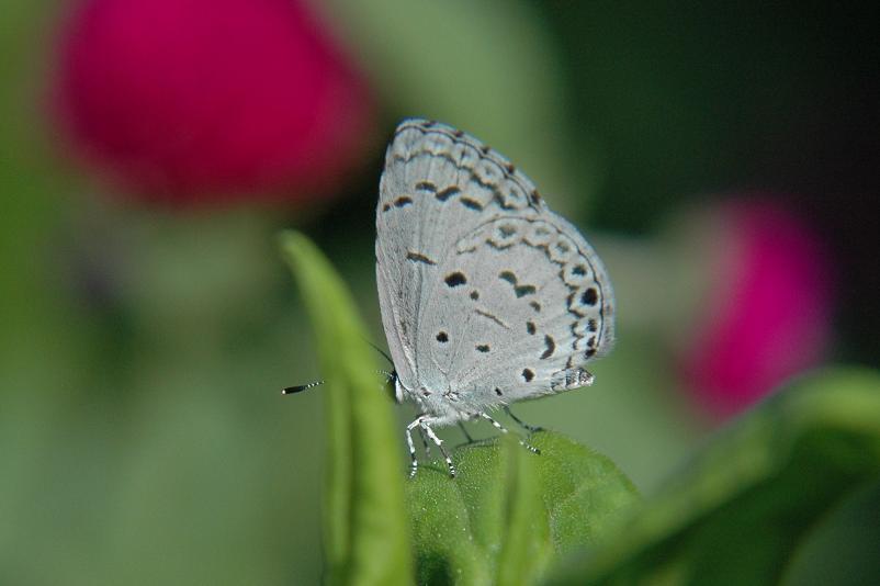 2009年10月の思い出の蝶_e0194952_15434640.jpg