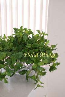 グリーン3種&白い花のアレンジ_b0151059_15352290.jpg