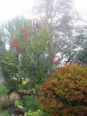 濃い霧に包まれています_a0129867_15115537.jpg