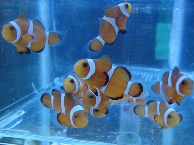 海水魚・水草・日本産淡水魚_f0189122_1311358.jpg