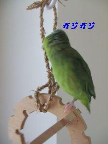 b0082757_1565576.jpg