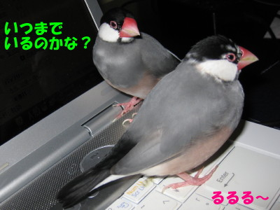 b0158061_2054551.jpg