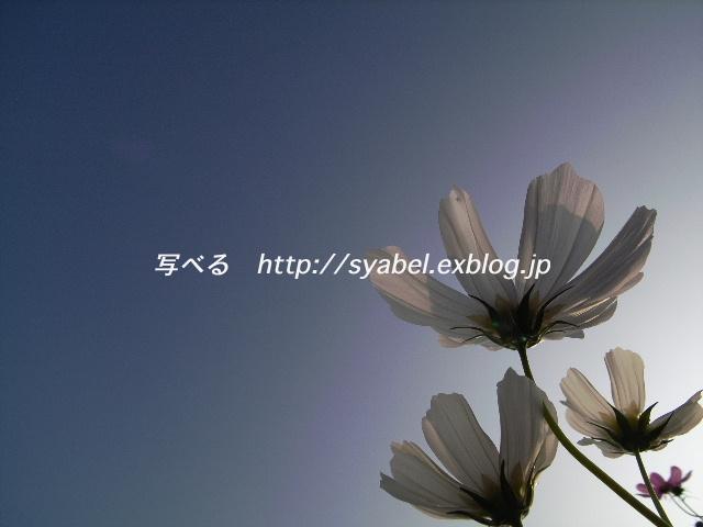 c0153764_2035082.jpg
