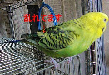 f0196665_1244938.jpg