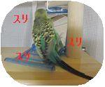 f0196665_130015.jpg