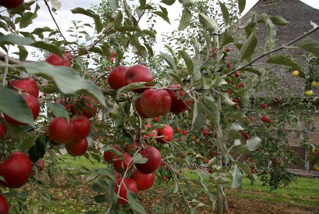 実りの秋。弘前市りんご公園♪_a0136293_1212134.jpg