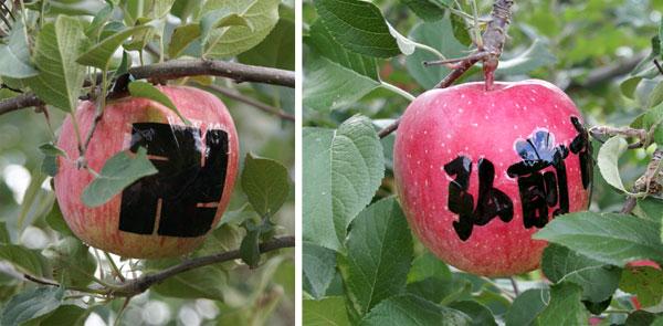 実りの秋。弘前市りんご公園♪_a0136293_12122929.jpg